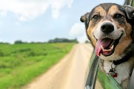 Tips on Travelling with your dogs