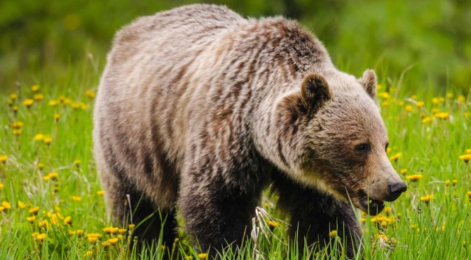 Know more about the Bear