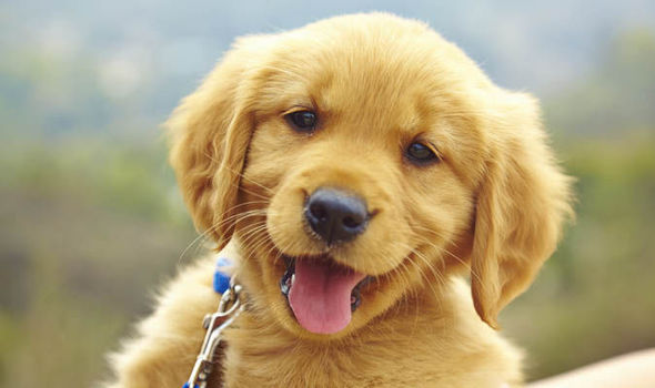 20 Interesting Facts About Dogs 🐕