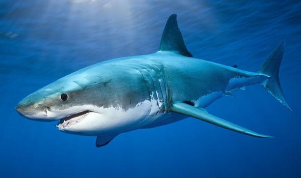 Sharks 🦈