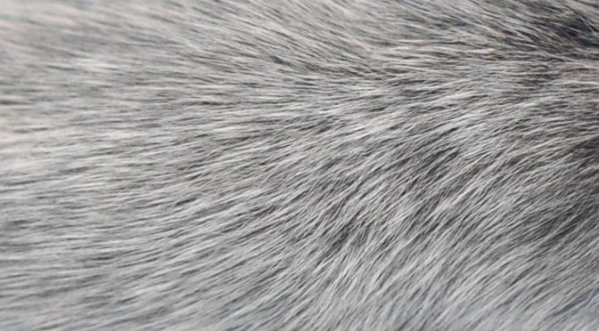 How to prevent grey hair