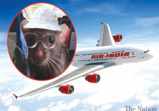 Rat Attack India Flight Air Plane