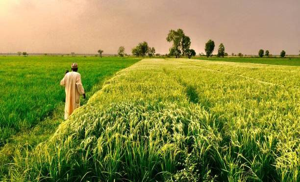 Why all Nigerians should go into Agriculture