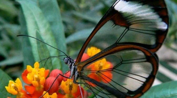 10 Transparent Animals You Never Knew Existed