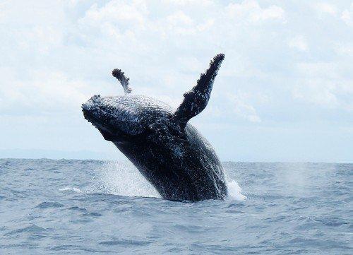 Whale, Madagascar © Krishna Naudin / Flickr